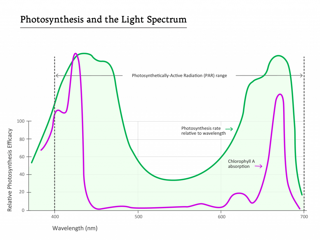 Photosynthesis and the Light Spectrum Graph Clear BG